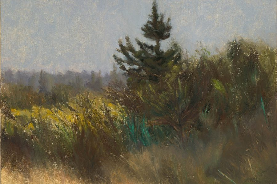 Paul Chizik - Canadian Pine. Oil on Linen 12 x 15 inches