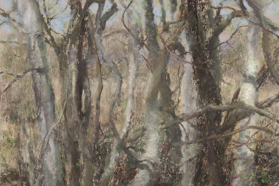 Paul Chizik - Twisted Birches on a Broken Land. Soft Pastel 11 x 12.75 inches